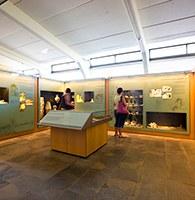 Safari al museu