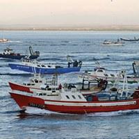 Visita guiada al port de pesca i a la subhasta de peix.
