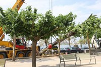 Enretirada palmeres