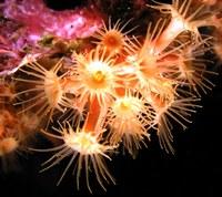 foto subaquàtica
