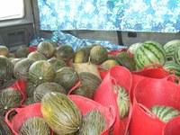 Melons comissats