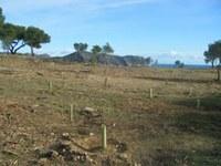 reforestació