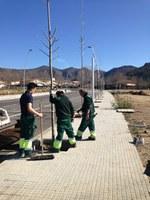 503 nous arbres a Roses amb el pla de gestió i millora de l'arbrat 2014