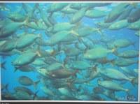 Exposició de fotografies submarines del Club Badia de Roses a l'Oficina de Turisme