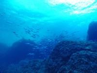 La Càtedra Oceans posa a l'abast del públic general els coneixements sobre la relació entre mar i salut