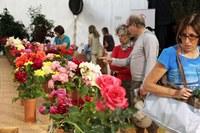 Les inscripcions per al Concurs Floral de Roses, obertes fins al proper divendres 29 de maig