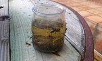 @programatigre, mesures de prevenció i tota l'actualitat sobre el mosquit tigre, ara també a les xarxes socials